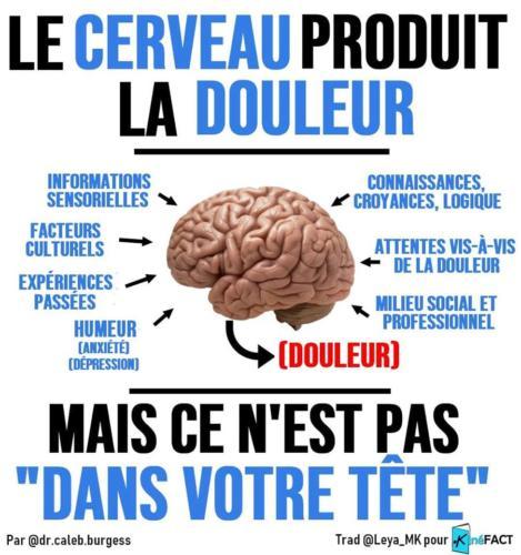 Douleur et cerveau
